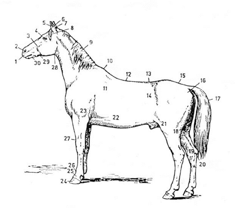 arklio-anatomija