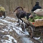 Išbandymai Jagėlonių miške. M. Karčemarsko nuotr.