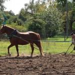 Ūkininkai A. Masys ir V. Banys demonstruoja arimą. V. Mauros nuotr.